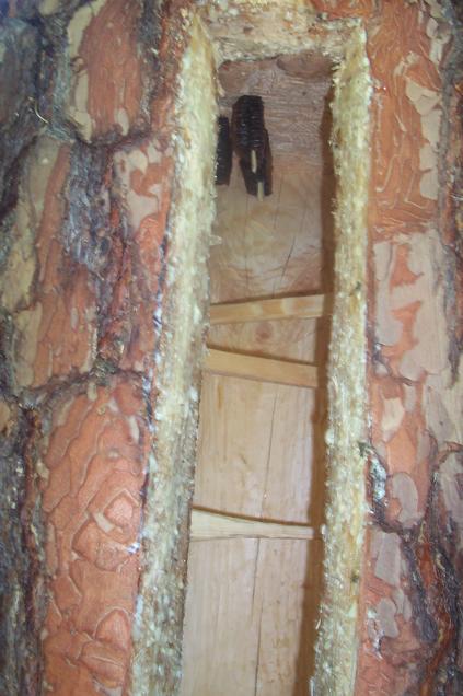 Wnętrze barci z zanętą
