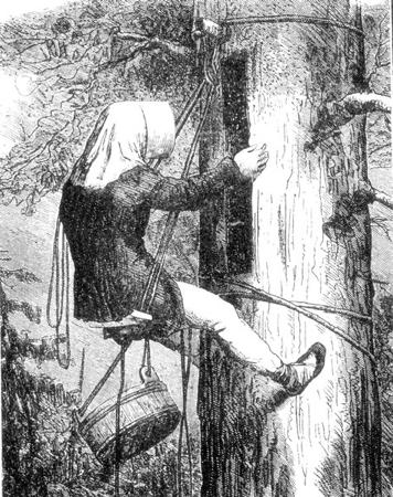 Bartnik na leziwie w stroju historycznym